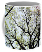 Branches Against Sky In Spring Outback Coffee Mug
