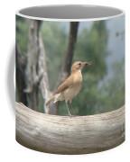 Brazilian Ovenbird Coffee Mug