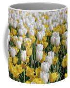 Breathtaking Field Of Blooming Yellow And White Tulips Coffee Mug