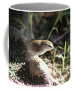 Breswick Wren On Tree Root 2 Coffee Mug