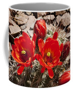Bright Orange Cactus Blossoms Coffee Mug