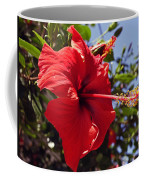 Brightly Colored Hibiscus On The Greek Island Of Mykonos  Coffee Mug