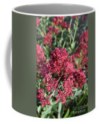 Brilliant Red Blooming Phlox Flowers In A Garden Coffee Mug