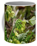 Brimstone On Cowslip Primrose Coffee Mug