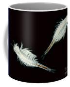 Brine Shrimp, Artemia Salina, Lm Coffee Mug