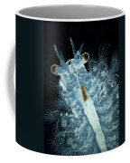 Brine Shrimp Artemia Salina Coffee Mug