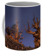 Bristlecone Pines At Sunset With A Rising Moon Coffee Mug