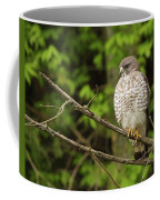 Broad Winged Hawk On The Lookout Coffee Mug
