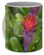 Bromeliad Flower Coffee Mug