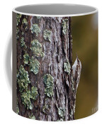 Brown Creeper Coffee Mug