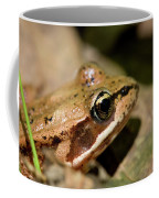 Brown Frog In The Forest - Western Oregon Coffee Mug