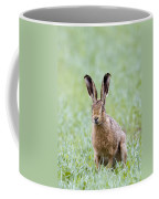 Brown Hare Coffee Mug