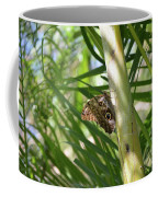 Brown Morpho Butterfly Resting On A Sunny Tree  Coffee Mug