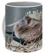 Brown Pelican 3 March 2018 Coffee Mug by D K Wall