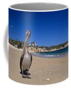 Brown Pelican At The Baja Coffee Mug