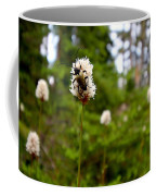 Brown Spruce Longhorn Beetle Coffee Mug