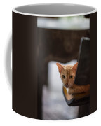 Buddhist Temple Cat Coffee Mug