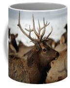 Bull Elk At Hardware Ranch Coffee Mug