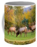 Bull Elk  Bugling With Cow Elks - Rutting Season Coffee Mug