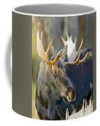 Bull Moose Up Close Coffee Mug