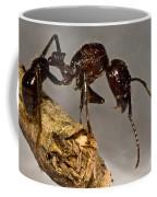 Bullet Ant Coffee Mug