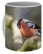 Bullfinch Coffee Mug