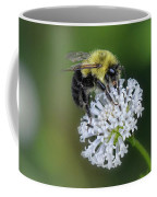 Bumble Bee On White Wild Flower On Banks Of Tennessee River At Shiloh National Military Park Coffee Mug