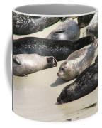 Bunch Of Harbor Seals Resting On A Beach Coffee Mug