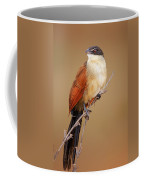 Burchell's Coucal - Rainbird Coffee Mug