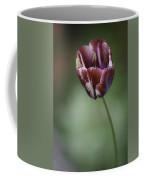 Burgandy Striped Tulip 2 Coffee Mug