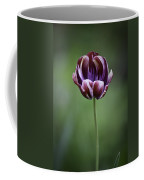 Burgandy Striped Tulip 3 Coffee Mug