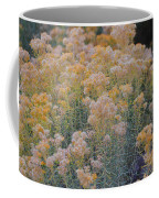 Burro Bush Coffee Mug