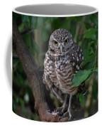Burrowing Owl Color Version Coffee Mug