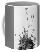 Butter Cups Red Clover And Plantain 1526 Coffee Mug