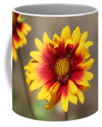 Butter Yellow And Crimson Red Coneflower Coffee Mug