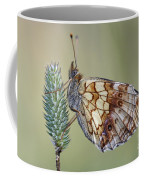 Butterfly - Meadow Satyrid Coffee Mug