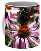 Butterfly And Pink Cone Flower Coffee Mug