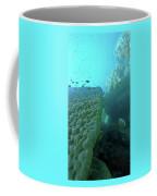 Butterfly Fish  Coffee Mug by Debbie Cundy