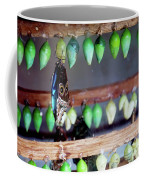Butterfly With Butterfly Chrysalis 1 Coffee Mug