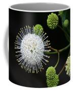 Buttonbush Flowers Coffee Mug