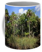Cabbage Palms Along The Cotee River Coffee Mug