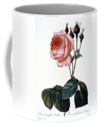 Cabbage Rose Coffee Mug