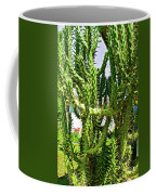 Cactus At Pilgrim Place In Claremont-california  Coffee Mug