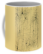 Cajal Drawing Of Microscopic Structure Of The Brain 1904 Coffee Mug