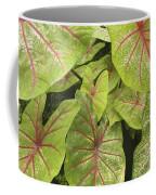 Caladium Leaves Coffee Mug