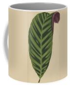 Calathea Zebrina, Maranta Zebrina Coffee Mug