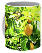 California Bright Orange Fruit Tree In Downtown Sacramento In Ca Coffee Mug
