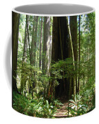 California Redwood Trees Forest Art Coffee Mug