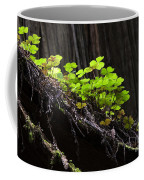 California Redwoods 4 Coffee Mug