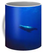 California Sea Lion Male Free Swims Coffee Mug by James Forte